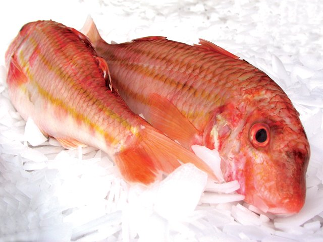 red-mullet