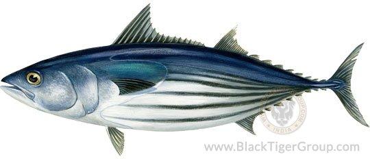 skip-tuna